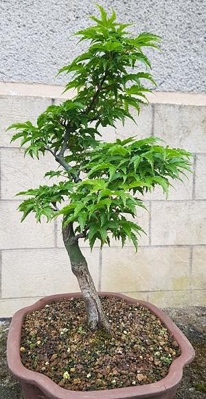 http://www.espritsdegoshin.fr/components/com_agora/img/members/4035/mini_shishigashira.jpg