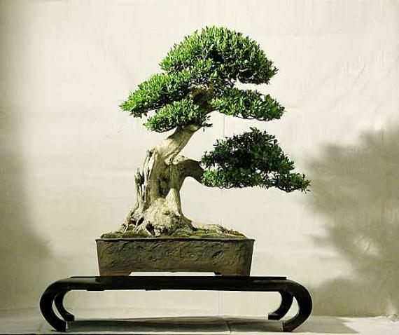 http://www.espritsdegoshin.fr/components/com_agora/img/members/40717_arbre-mat-2_462.jpg_thumb