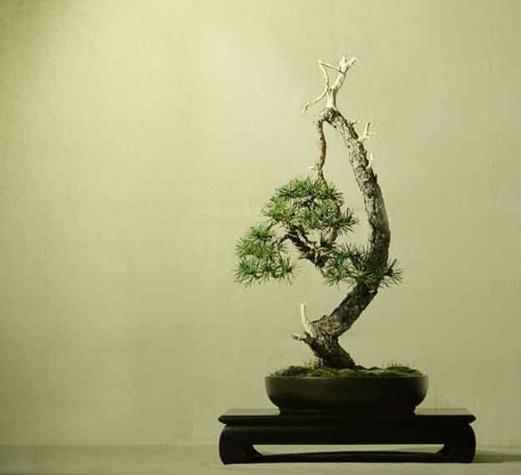 http://www.espritsdegoshin.fr/components/com_agora/img/members/40718_arbre-mat-1_148.jpg_thumb