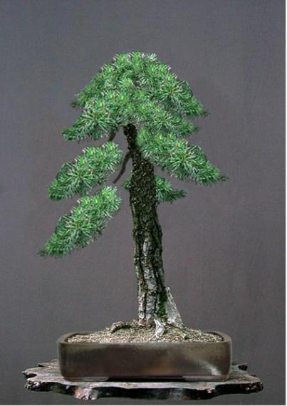 http://www.espritsdegoshin.fr/components/com_agora/img/members/41019_scots_pine01.jpg_thumb