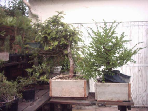 http://www.espritsdegoshin.fr/components/com_agora/img/members/41359_12-jardin-09_165.jpg_thumb