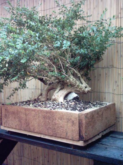 http://www.espritsdegoshin.fr/components/com_agora/img/members/41360_12-jardin-10_184.jpg_thumb