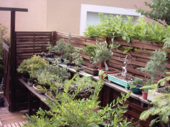 http://www.espritsdegoshin.fr/components/com_agora/img/members/41362_12-jardin-12_833.jpg_thumb