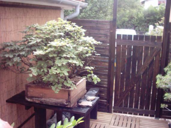http://www.espritsdegoshin.fr/components/com_agora/img/members/41363_12-jardin-13_845.jpg_thumb