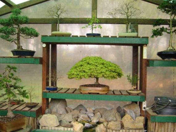 http://www.espritsdegoshin.fr/components/com_agora/img/members/42328_bonsa_02-1.jpg_thumb