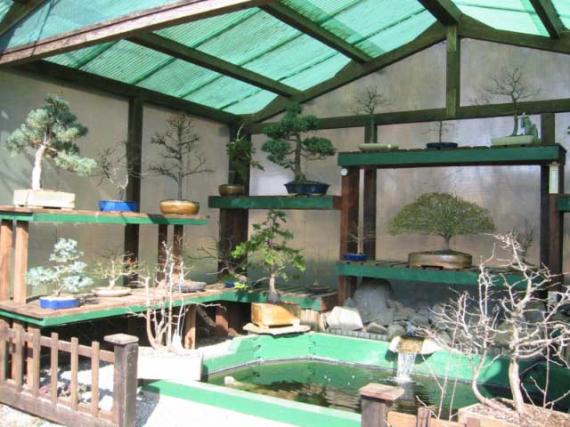 http://www.espritsdegoshin.fr/components/com_agora/img/members/42329_bonsai03-1.jpg_thumb
