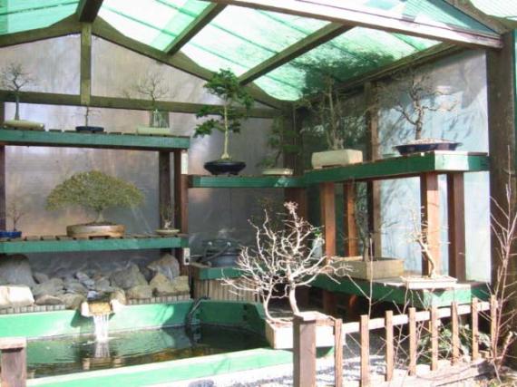 http://www.espritsdegoshin.fr/components/com_agora/img/members/42330_bonsai04-1.jpg_thumb