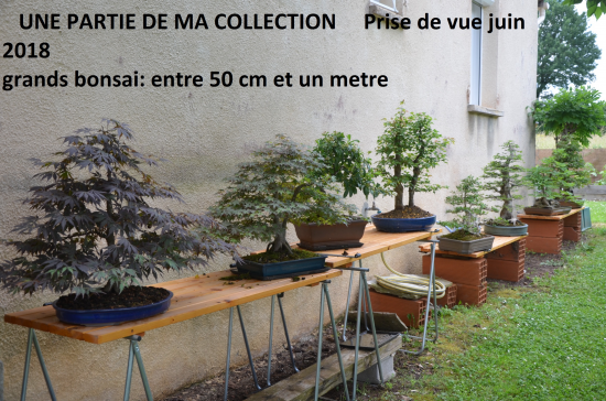 http://www.espritsdegoshin.fr/components/com_agora/img/members/4350/mini_DSC-0541---Copie.JPG