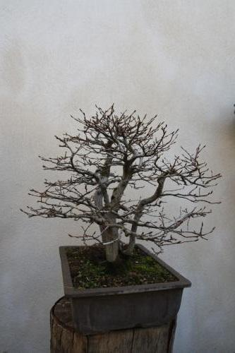 http://www.espritsdegoshin.fr/components/com_agora/img/members/4350/mini_charme-titus-2.jpg