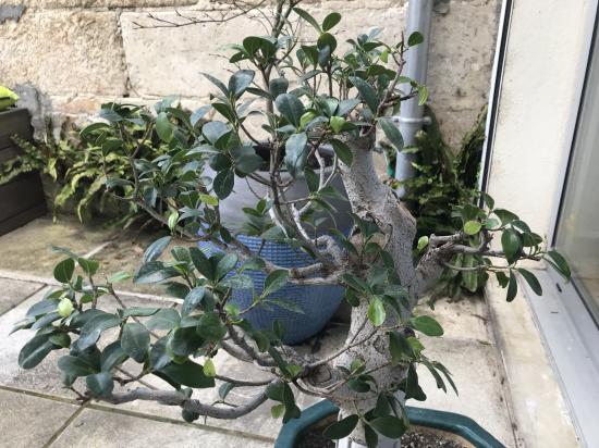 http://www.espritsdegoshin.fr/components/com_agora/img/members/4373/mini_bonsai4.jpeg