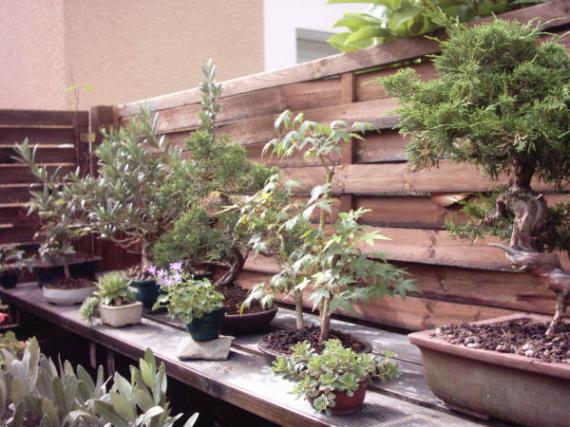 http://www.espritsdegoshin.fr/components/com_agora/img/members/45625_12-jardin-02_576.jpg_thumb