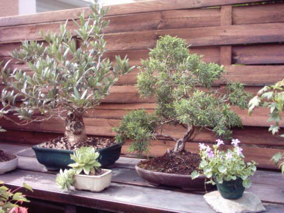http://www.espritsdegoshin.fr/components/com_agora/img/members/45627_12-jardin-04_107.jpg_thumb