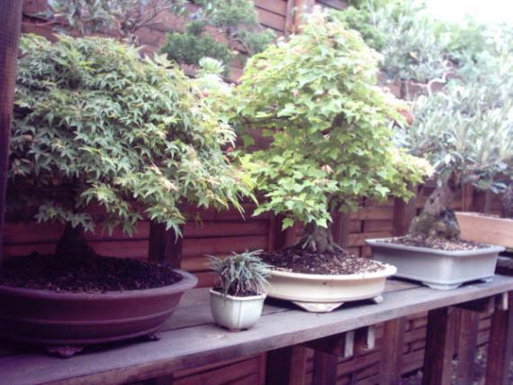 http://www.espritsdegoshin.fr/components/com_agora/img/members/45629_12-jardin-06_959.jpg_thumb