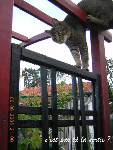 http://www.espritsdegoshin.fr/components/com_agora/img/members/5018_noisette_acrobate_107.jpg