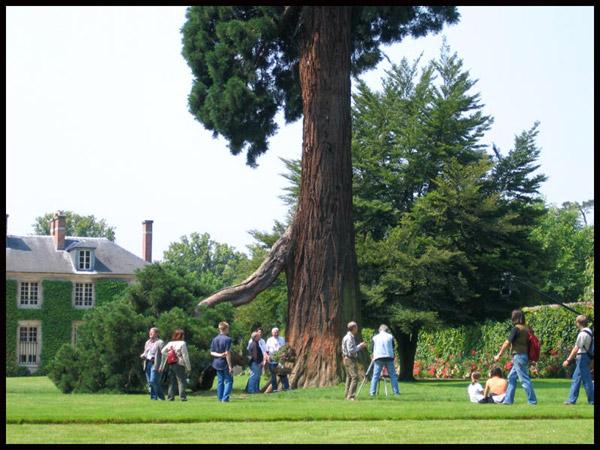 http://www.espritsdegoshin.fr/components/com_agora/img/members/50260_sequoia-gen2.jpg