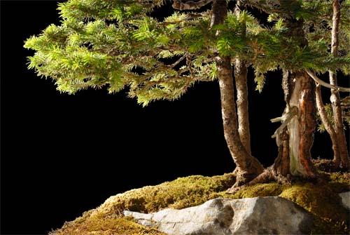 http://www.espritsdegoshin.fr/components/com_agora/img/members/50262_2007-06-03-120505_copie.jpg