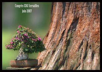 http://www.espritsdegoshin.fr/components/com_agora/img/members/50378_Affiche-mont1.jpg