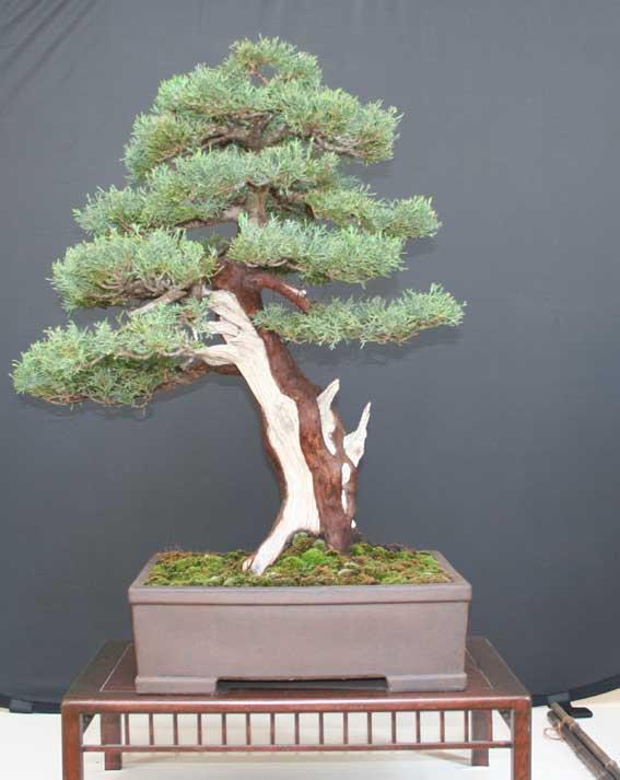 http://www.espritsdegoshin.fr/components/com_agora/img/members/50982_Juniperus-communis.jpg