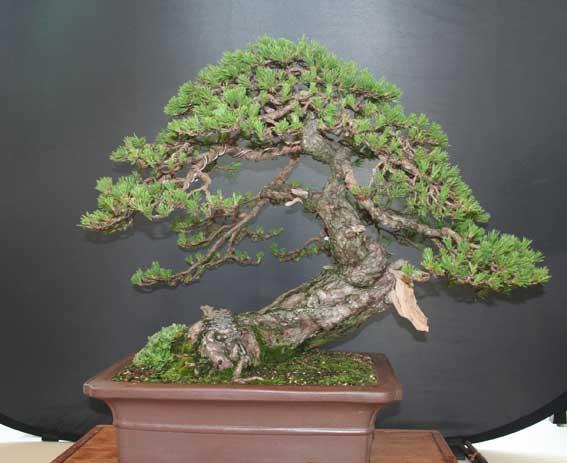 http://www.espritsdegoshin.fr/components/com_agora/img/members/50989_Pinus-sylvestris-2.jpg