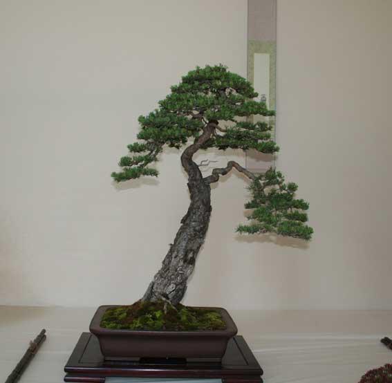 http://www.espritsdegoshin.fr/components/com_agora/img/members/50990_Pinus-sylvestris-3.jpg