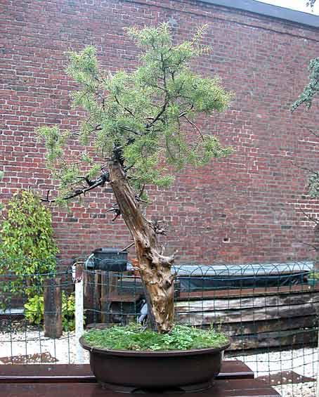 http://www.espritsdegoshin.fr/components/com_agora/img/members/51687_arbre11nw8.jpg