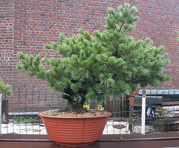 http://www.espritsdegoshin.fr/components/com_agora/img/members/51688_arbre12vs2.jpg