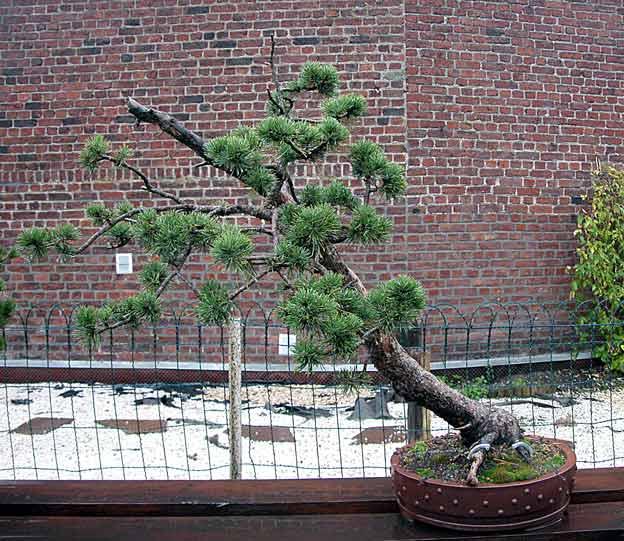 http://www.espritsdegoshin.fr/components/com_agora/img/members/51689_arbre13ou6.jpg