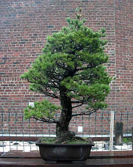 http://www.espritsdegoshin.fr/components/com_agora/img/members/51690_arbre14pm3.jpg