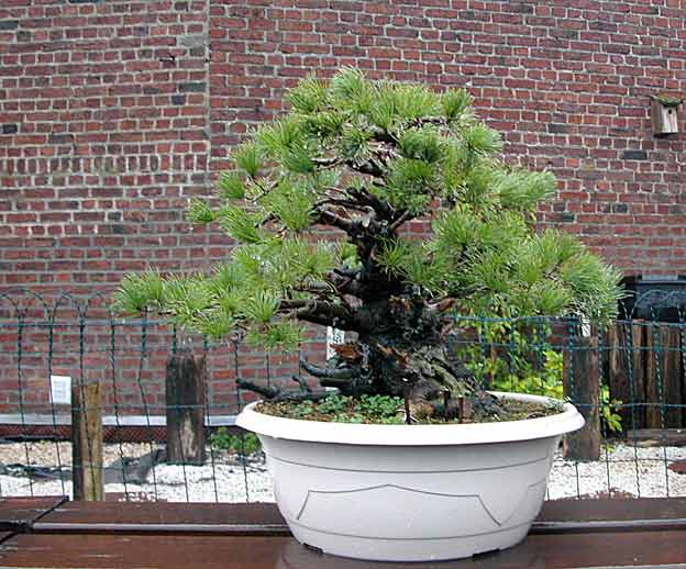 http://www.espritsdegoshin.fr/components/com_agora/img/members/51691_arbre15iy4.jpg