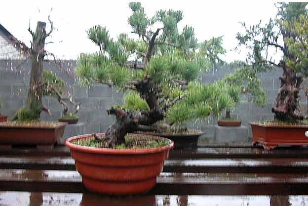 http://www.espritsdegoshin.fr/components/com_agora/img/members/51692_arbre16dd0.jpg