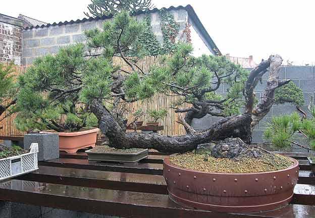 http://www.espritsdegoshin.fr/components/com_agora/img/members/51693_arbre17lf4.jpg