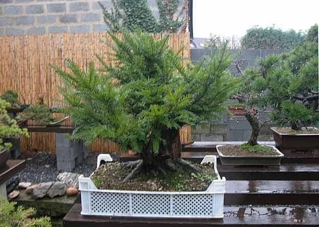 http://www.espritsdegoshin.fr/components/com_agora/img/members/51694_arbre18il8.jpg