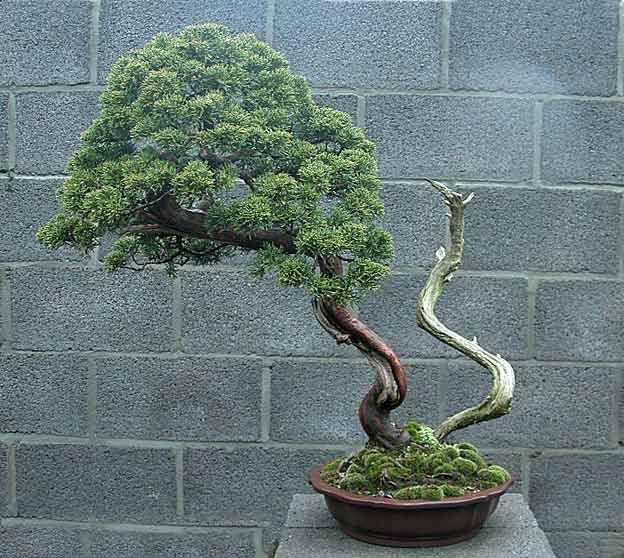 http://www.espritsdegoshin.fr/components/com_agora/img/members/51737_arbre3oo9.jpg
