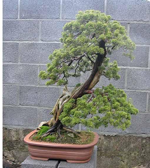 http://www.espritsdegoshin.fr/components/com_agora/img/members/51738_arbre1hy1.jpg