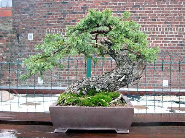 http://www.espritsdegoshin.fr/components/com_agora/img/members/51743_arbre8nj9.jpg