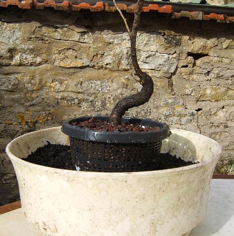 http://www.espritsdegoshin.fr/components/com_agora/img/members/59483_St-Lfev2008.jpg