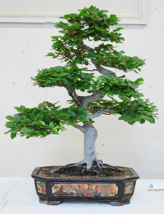 http://www.espritsdegoshin.fr/components/com_agora/img/members/64678_arbre_02.jpg