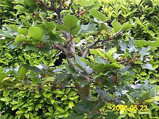 http://www.espritsdegoshin.fr/components/com_agora/img/members/65198_PICT0005.JPG
