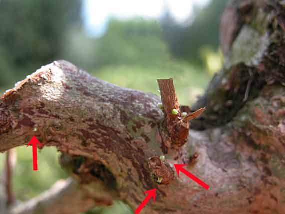 http://www.espritsdegoshin.fr/components/com_agora/img/members/65728_3-branche.jpg