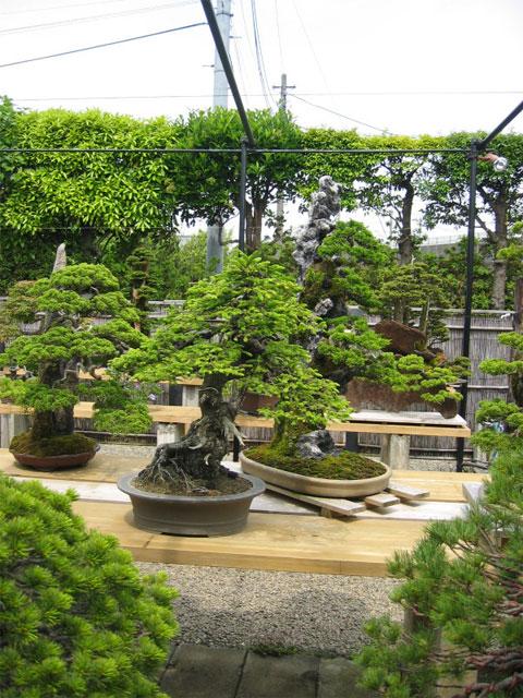 http://www.espritsdegoshin.fr/components/com_agora/img/members/65951_kimura0004.jpg