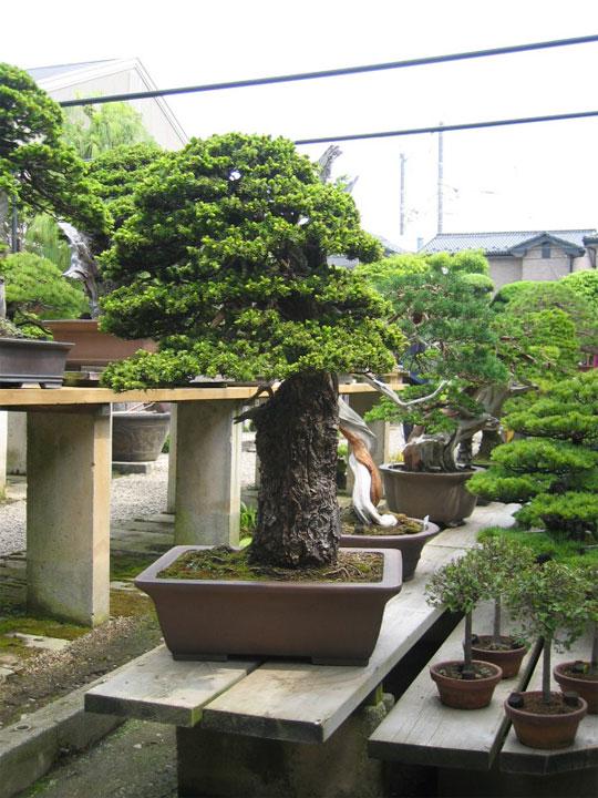 http://www.espritsdegoshin.fr/components/com_agora/img/members/65954_kimura0007.jpg