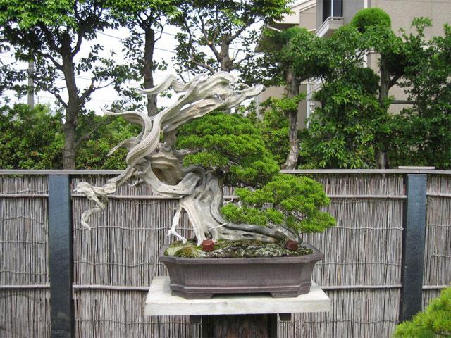 http://www.espritsdegoshin.fr/components/com_agora/img/members/65959_kimura0012.jpg