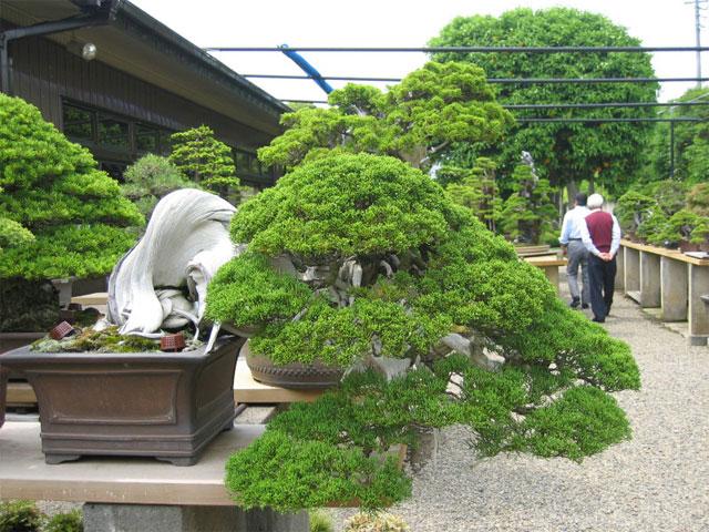 http://www.espritsdegoshin.fr/components/com_agora/img/members/65968_kimura0022.jpg