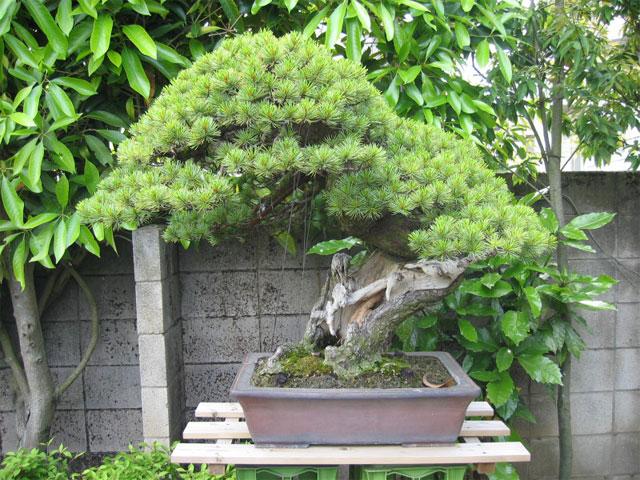 http://www.espritsdegoshin.fr/components/com_agora/img/members/65971_kimura0025.jpg