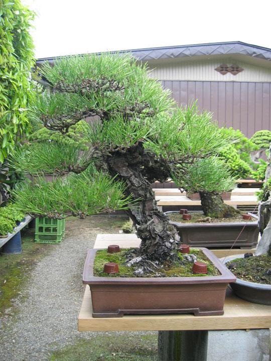 http://www.espritsdegoshin.fr/components/com_agora/img/members/65981_kimura0028.jpg