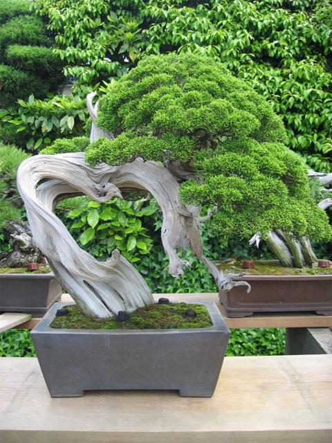 http://www.espritsdegoshin.fr/components/com_agora/img/members/65987_kimura0034.jpg