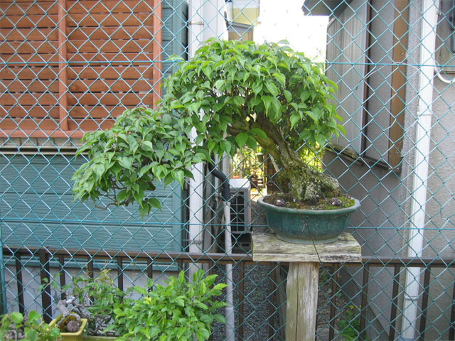 http://www.espritsdegoshin.fr/components/com_agora/img/members/67436_yorozuen0017.jpg