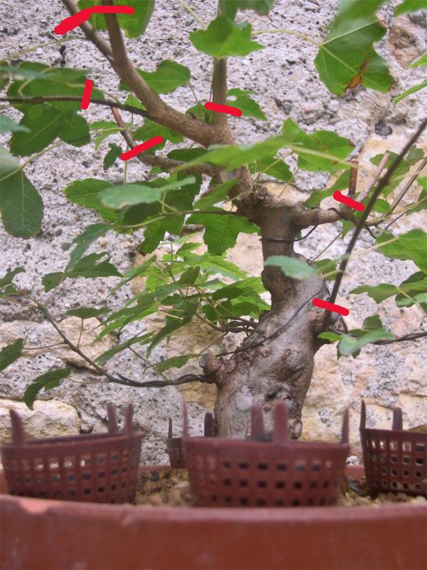 http://www.espritsdegoshin.fr/components/com_agora/img/members/68637_Buerger2.jpg