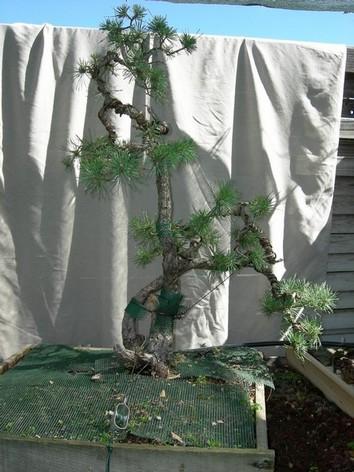 http://www.espritsdegoshin.fr/components/com_agora/img/members/68753_pinestampe1.jpg