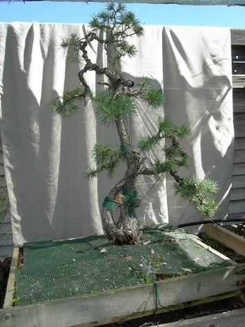 http://www.espritsdegoshin.fr/components/com_agora/img/members/68754_pinestampe2.jpg
